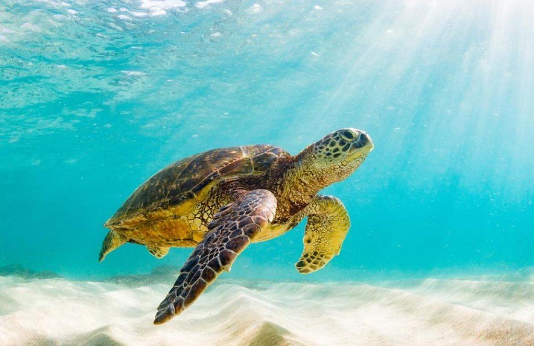 cropped-turtle.jpg